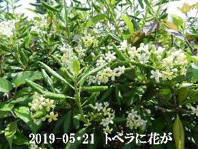 2019-05・21 今日の出遭い・・・ (1).JPG