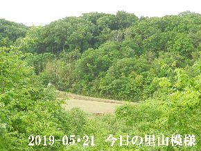 2019-05・21 今日の里山模様・・・ (3).JPG