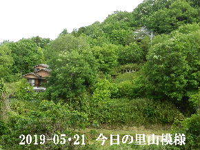 2019-05・21 今日の里山模様・・・ (4).JPG