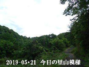 2019-05・21 今日の里山模様・・・ (5).JPG