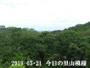 2019-05・21 今日の里山模様・・・ (6).JPG
