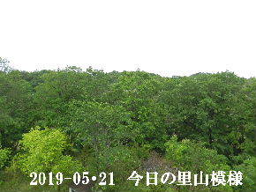 2019-05・21 今日の里山模様・・・ (7).JPG