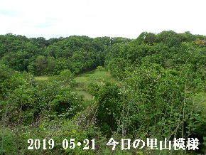 2019-05・21 今日の里山模様・・・ (8).JPG