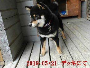 2019-05・21 今日の麻呂 (1).JPG