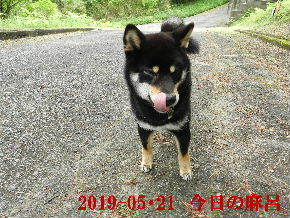 2019-05・21 今日の麻呂 (3).JPG