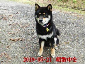 2019-05・21 今日の麻呂 (4).JPG