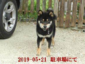 2019-05・21 今日の麻呂 (6).JPG