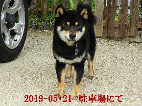 2019-05・21 今日の麻呂 (7).JPG