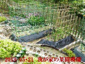 2019-05・21 我が家のスナップ・・・ (3).JPG