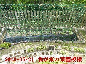 2019-05・21 我が家のスナップ・・・ (4).JPG