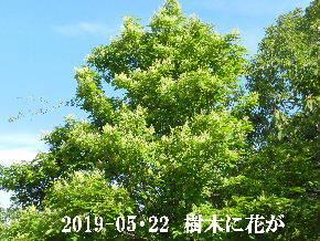 2019-05・22 今日の出遭い・・・ (2).JPG