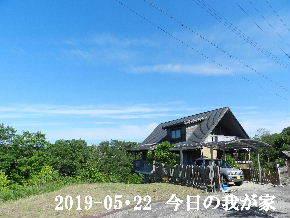 2019-05・22 今日の里山模様・・・ (1).JPG