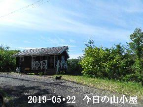 2019-05・22 今日の里山模様・・・ (2).JPG