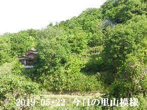 2019-05・22 今日の里山模様・・・ (4).JPG