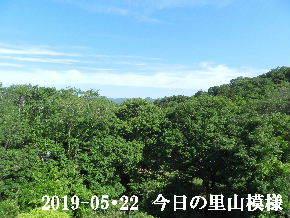 2019-05・22 今日の里山模様・・・ (5).JPG