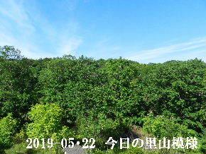 2019-05・22 今日の里山模様・・・ (6).JPG