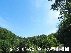 2019-05・22 今日の里山模様・・・ (8).JPG