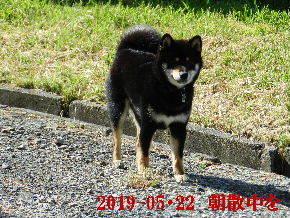 2019-05・22 今日の麻呂 (2).JPG