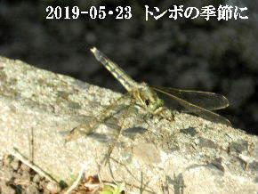 2019-05・23 今日の出遭い・・・ (1).JPG