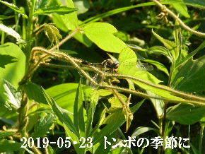 2019-05・23 今日の出遭い・・・ (3).JPG