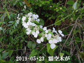 2019-05・23 今日の出遭い・・・ (4).JPG