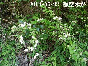 2019-05・23 今日の出遭い・・・ (5).JPG