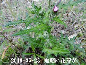 2019-05・23 今日の出遭い・・・ (7).JPG