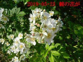2019-05・23 今日の出遭い・・・ (9).JPG