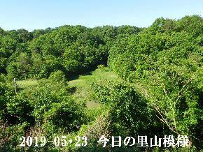 2019-05・23 今日の里山模様・・・ (3).JPG