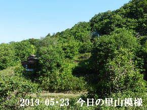 2019-05・23 今日の里山模様・・・ (4).JPG