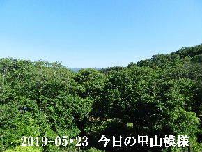 2019-05・23 今日の里山模様・・・ (6).JPG