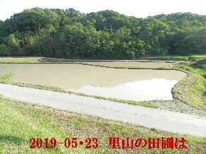 2019-05・23 今日の里山模様・・・ (8).JPG