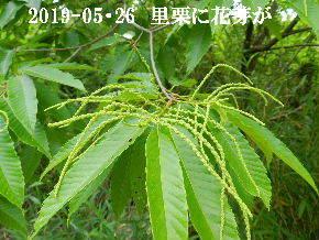 2019-05・26 今日の出遭い・・・ (2).JPG