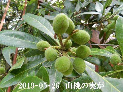 2019-05・26 今日の出遭い・・・ (4).JPG