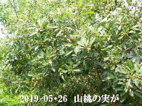 2019-05・26 今日の出遭い・・・ (5).JPG