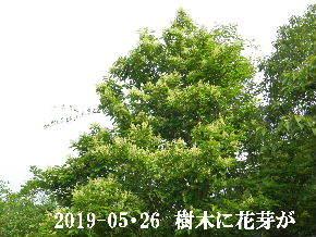 2019-05・26 今日の出遭い・・・ (6).JPG
