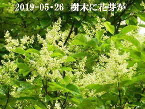 2019-05・26 今日の出遭い・・・ (7).JPG