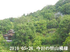2019-05・26 今日の里山模様・・・ (5).JPG