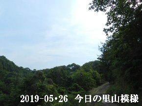 2019-05・26 今日の里山模様・・・ (6).JPG