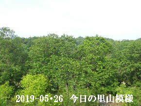 2019-05・26 今日の里山模様・・・ (8).JPG