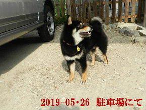 2019-05・26 今日の麻呂 (3).JPG