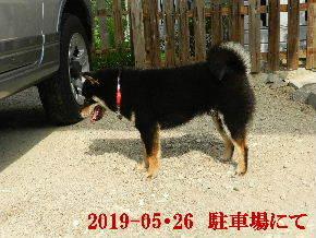 2019-05・26 今日の麻呂 (4).JPG