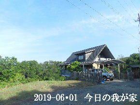 2019-06・01 今日の里山模様・・・ (1).JPG