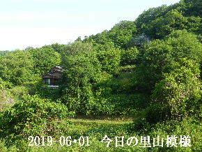 2019-06・01 今日の里山模様・・・ (4).JPG