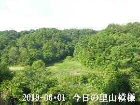 2019-06・01 今日の里山模様・・・ (7).JPG