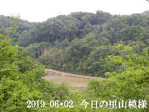2019-06・02 今日の里山模様・・・ (3).JPG
