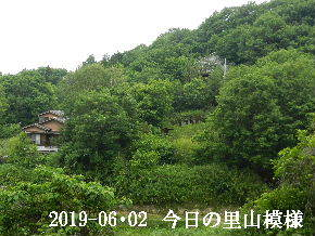 2019-06・02 今日の里山模様・・・ (4).JPG