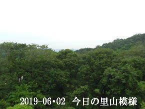 2019-06・02 今日の里山模様・・・ (5).JPG