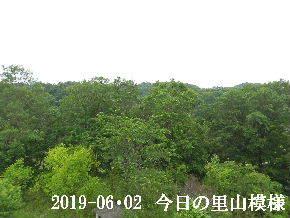 2019-06・02 今日の里山模様・・・ (6).JPG