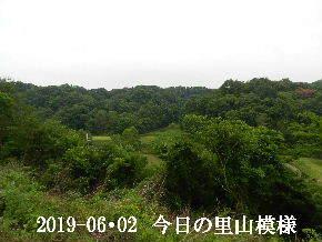 2019-06・02 今日の里山模様・・・ (7).JPG